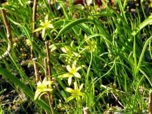 Blümchen im Gras