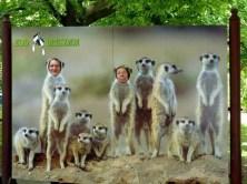 Fun in Zoo Dresden
