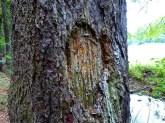 Verletzte Baumrinde