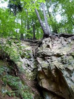 Baum am Felsvorsprung