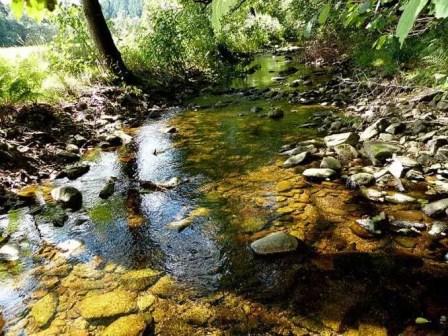 Klares Wasser im Bachlauf