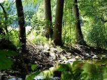 Flussufer mit Bäumen