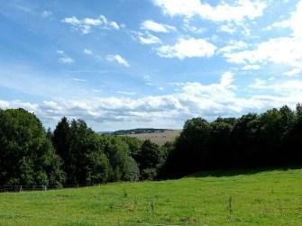 Blick auf Felder und Himmel mit Wald