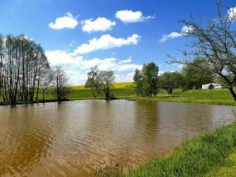 Teich mit Rapsfeld und Bäumen