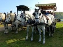 Kutschfahrt zum Fischerfest Moritzburg