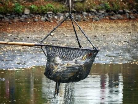 Abfischen mit Netz
