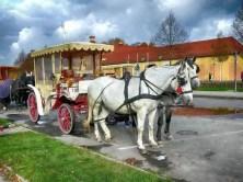 Kutsche zum Fischfest Moritzburg