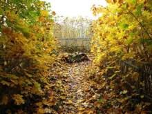 Herbststimmung Burg Hohnstein 1