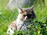 (Wild)katze im Wildgehege Moritzburg