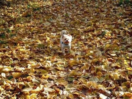 Laub Hund Wald