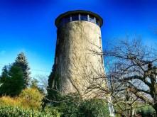 Turm Baum Efeu