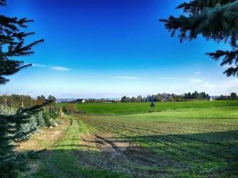 Aussicht Feld Landschaft Acker