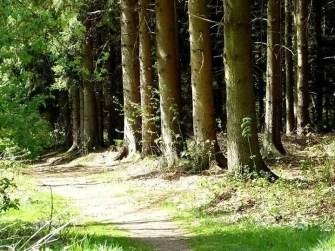 Waldweg Bäume Baumstämme Hospitalwald Kleinschirma