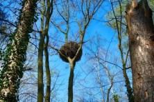 Sauriernest im Baum