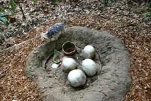 Hund brütet Saurier Eier aus