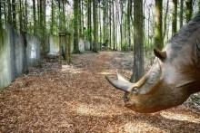 Achtung frei laufendes Urzeit Nashorn