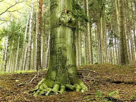 Großer Baum mit Wurzeln