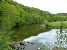 Flusslauf Natur Landschaft Zschopau