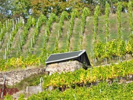 Schloss-Wackerbarth-Weingut-Bild-073