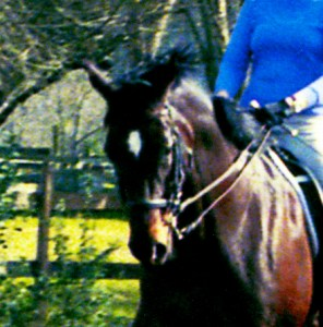 DRESSAGE: STRENGTHENING THE HIND LEGS