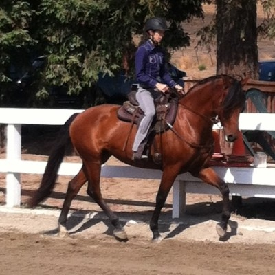 WHAT ARE SOME WAYS TO IMPROVE THE HORSE'S TOPLINE?  ANSWERED BY JEC A. BALLOU