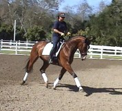 9yr Hanoverian 3rd Level