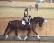 4yr Hanoverian 1st Level