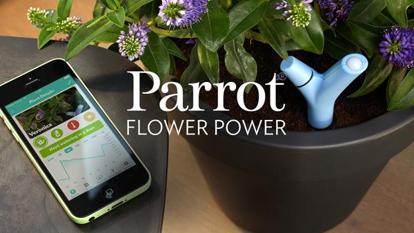 slider-flower-power-parrot
