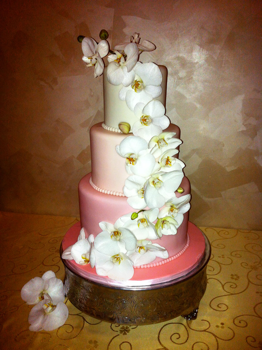Dress My Cake Custom Cake Studio