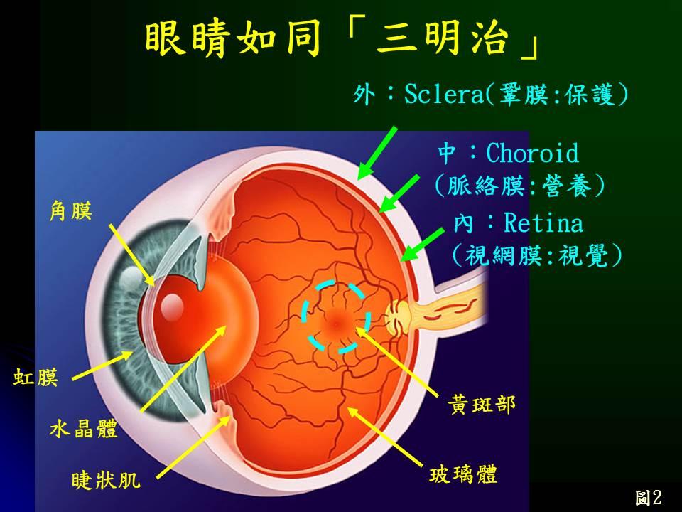 視網膜   [組圖+影片] 的最新詳盡資料** (必看!!) - www.go2tutor.com