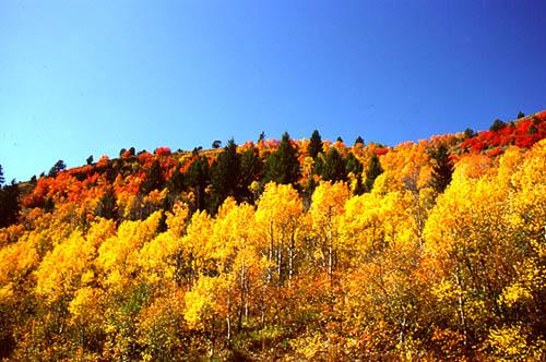 Scenic Fall Wallpaper Autumn Pictures Fall In Utah