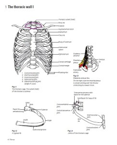 The thoracic wall I
