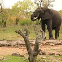 5 Day Kruger Safari