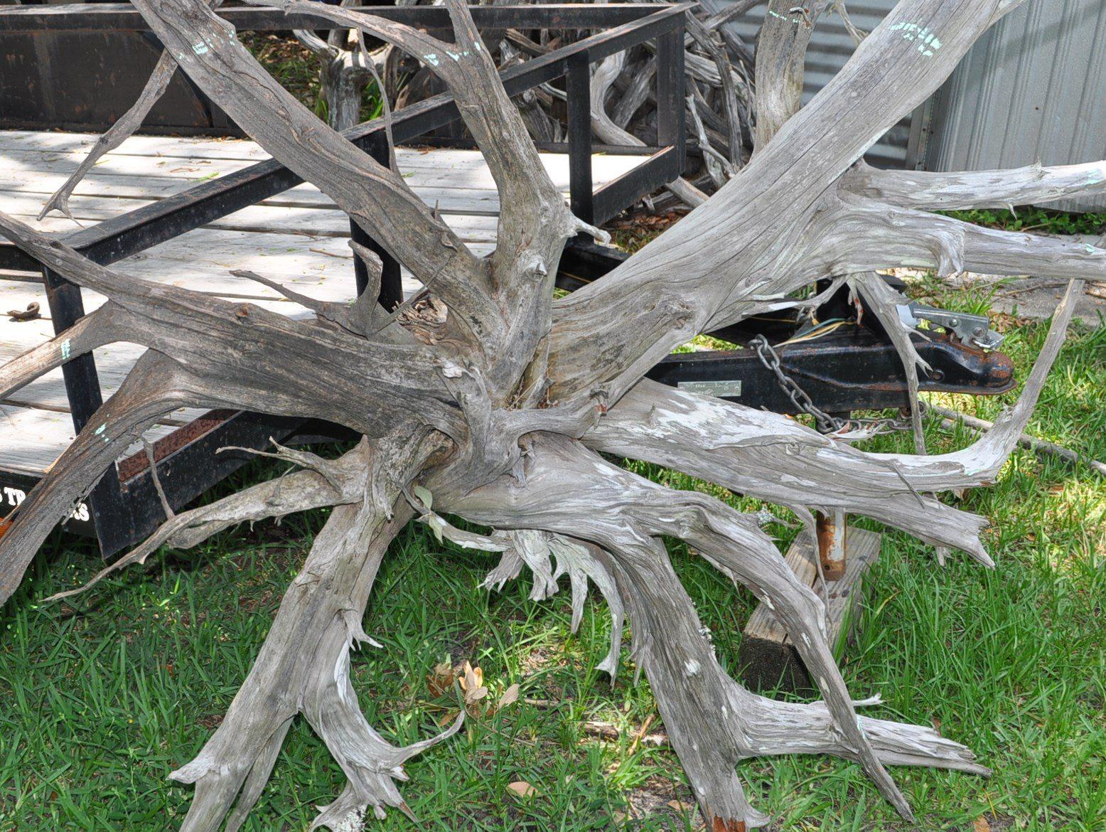 A driftwood chandelier