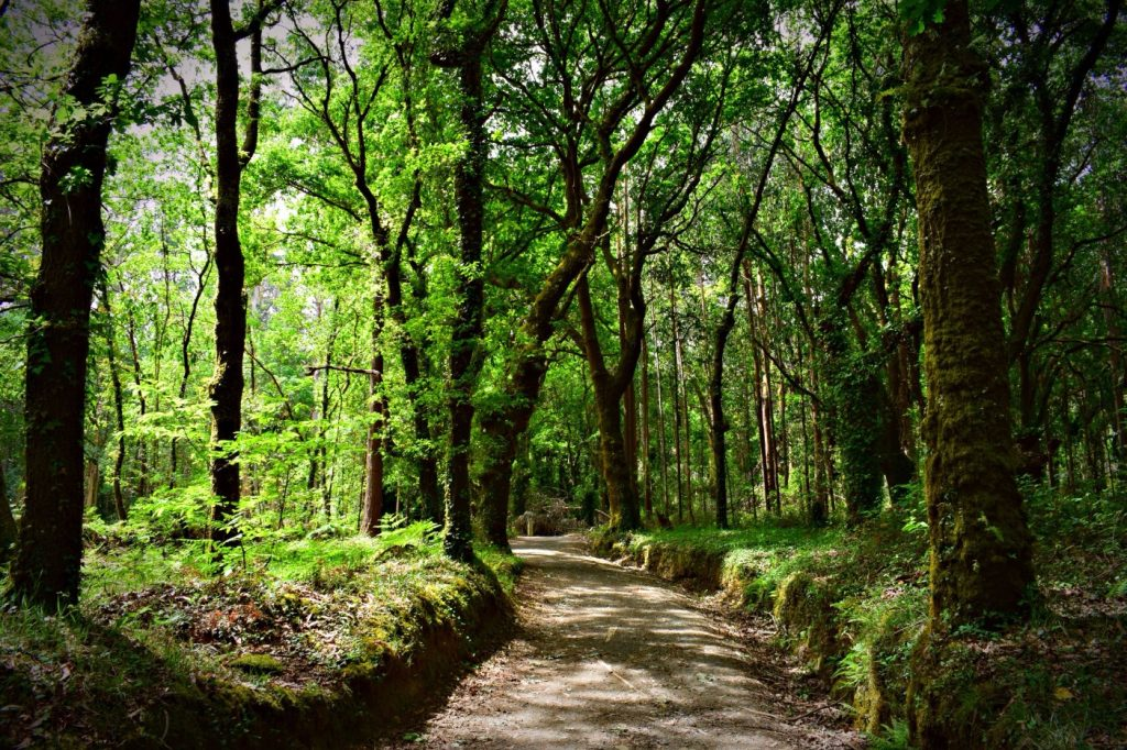 The Way of Saint James Hiking Trail in Galicia, Northern Spain