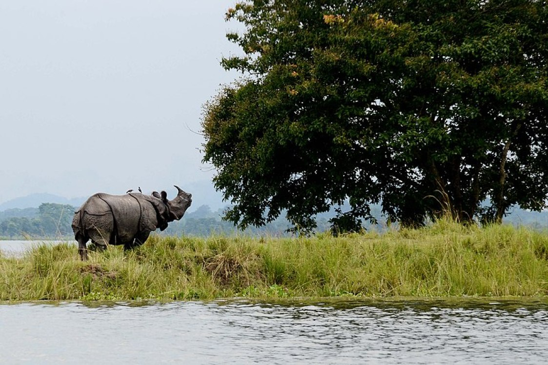 Kaziranga_National_Park India