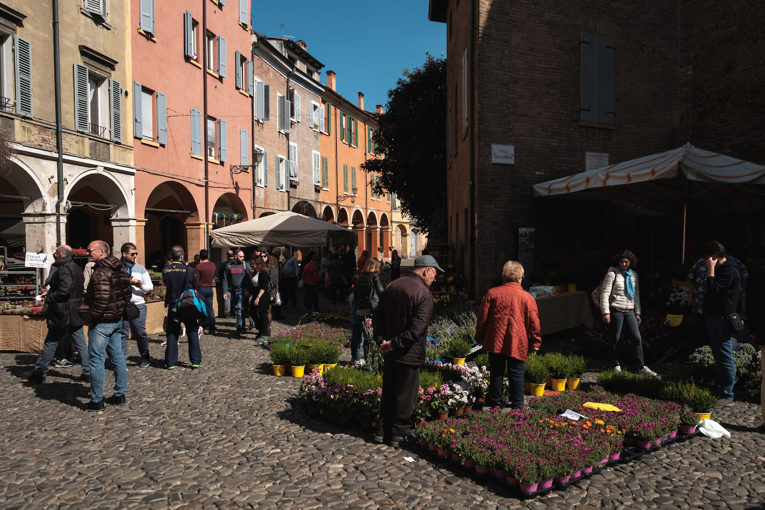 Flower market in Modena - Travel and Street Photography by Ben Holbrook from DriftwoodJournals.com-5493