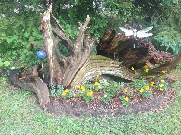 driftwood gardens and landscaping