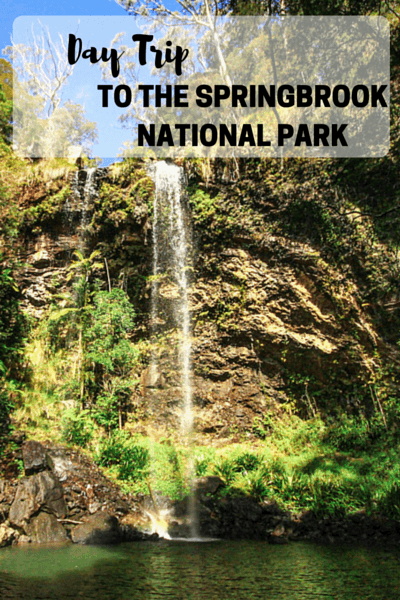 Day trip to the amazing Springbrook National Park