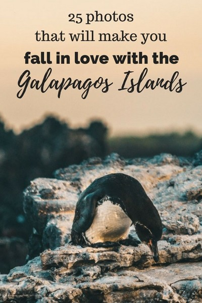 25 photos that will make you fall in love with the Galapagos Islands