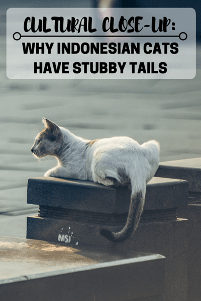 Why Indonesian Cats Have Stubby Tails?