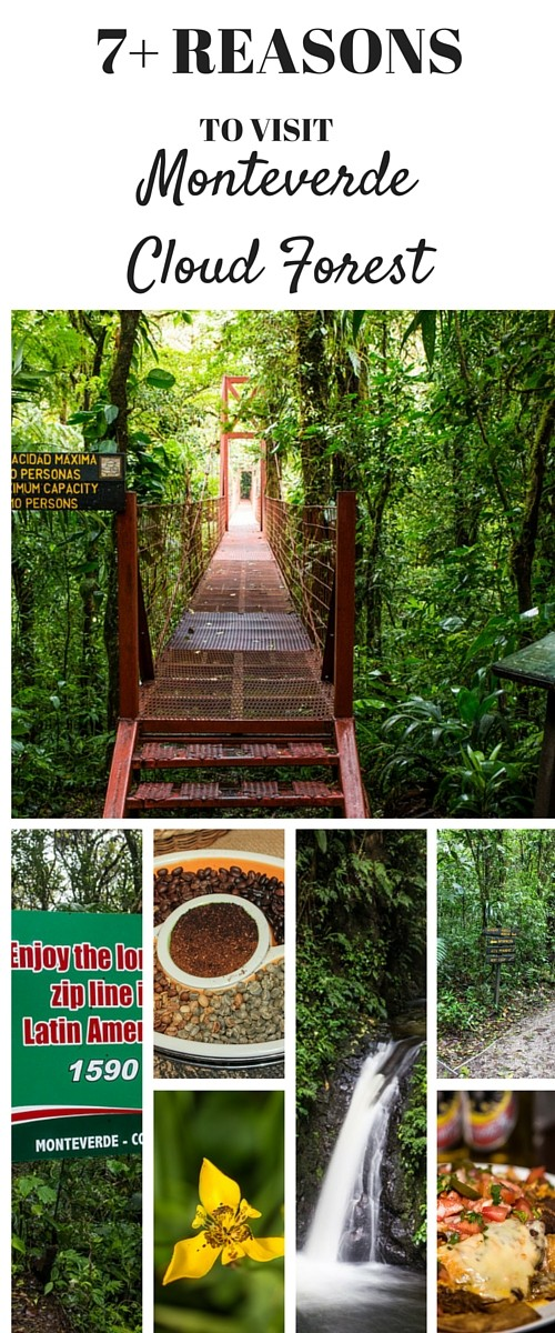 7+ Reasons to Visit Monteverde Cloud Forest