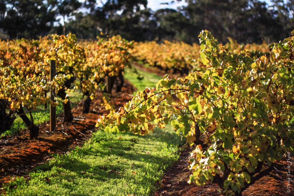 Vineard in Barossa Valley