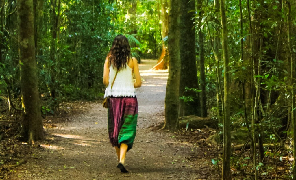 Roaming through the rainforest in Maleny, Queensland, Australia