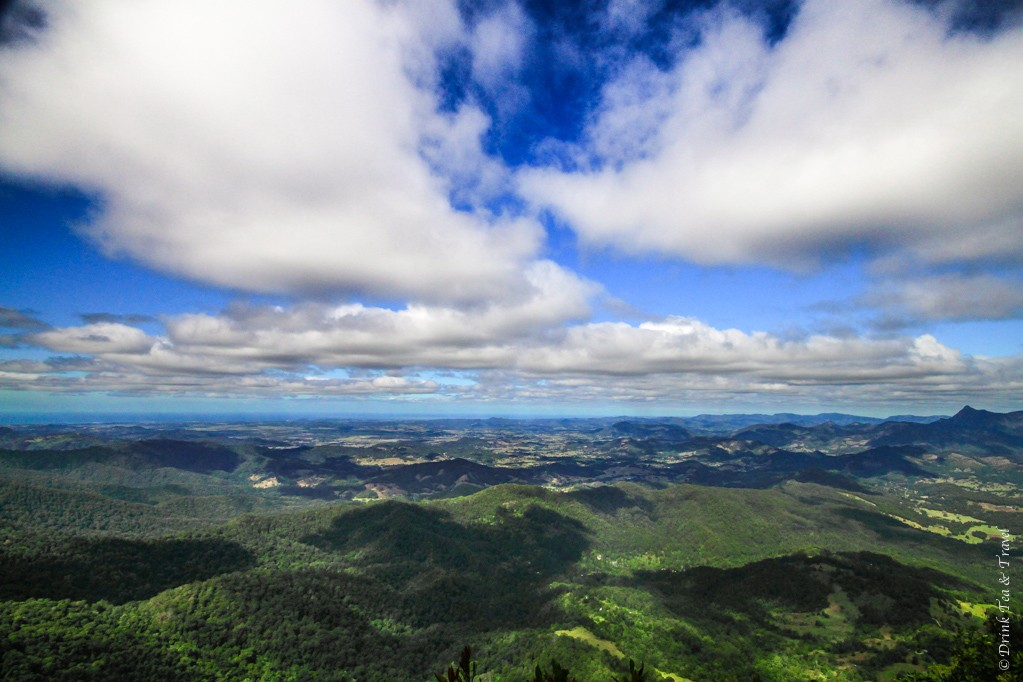 Views from the Best of All Lookout, Springbrook National Park
