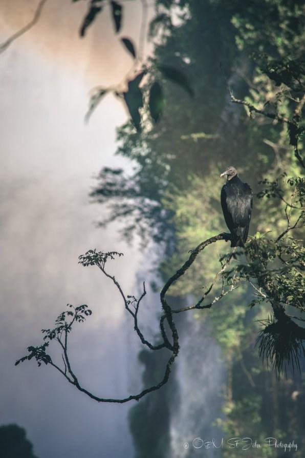 brazil-iguazu-falls-1955