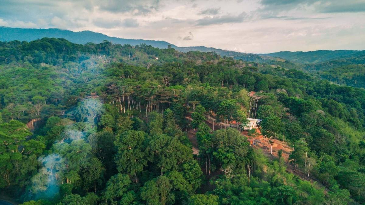 Lush tropic rainforest of Dominical