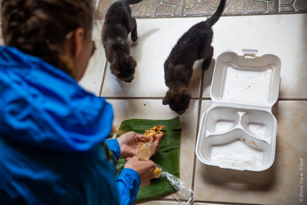 Feeding my kittens (I mean, the hotel's kittens) at the Monteverde Rustic Lodge in Santa Elena