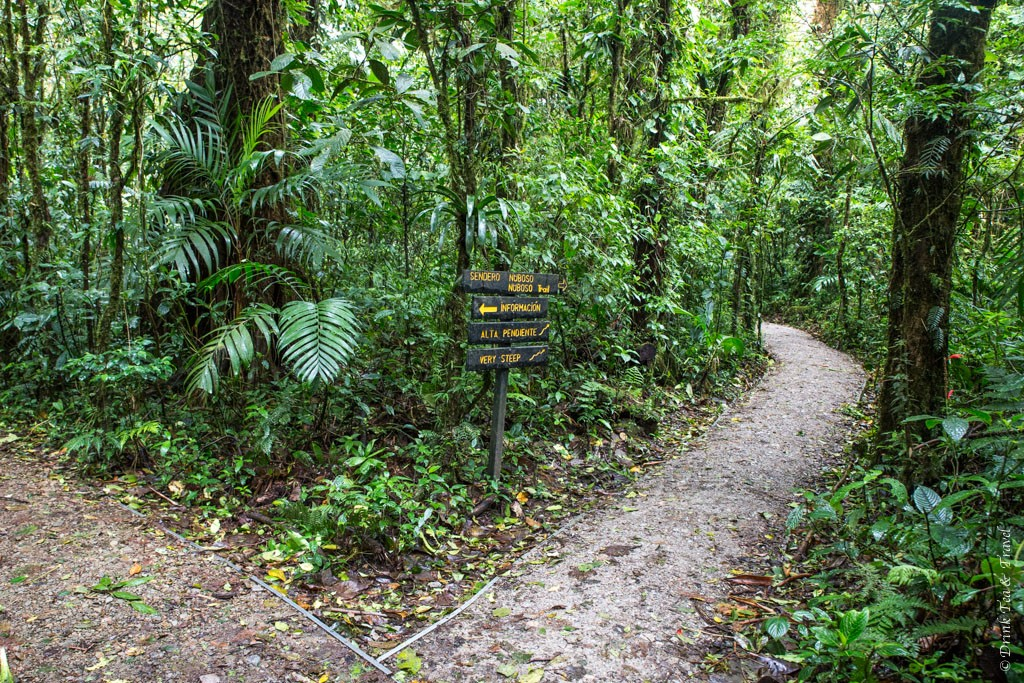 Costa Rica travel tips: Monteverde Cloud Forest Reserve, Costa Rica