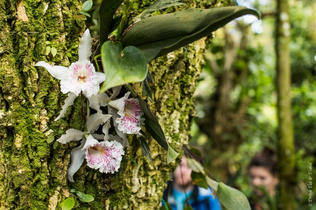 Reasons to visit Monteverde Cloud Forest: Orchid Garden